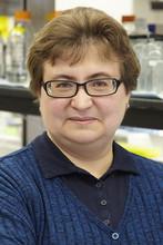 Olga Fedorova's picture
